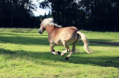 Wenn Pferde in Panik geraten