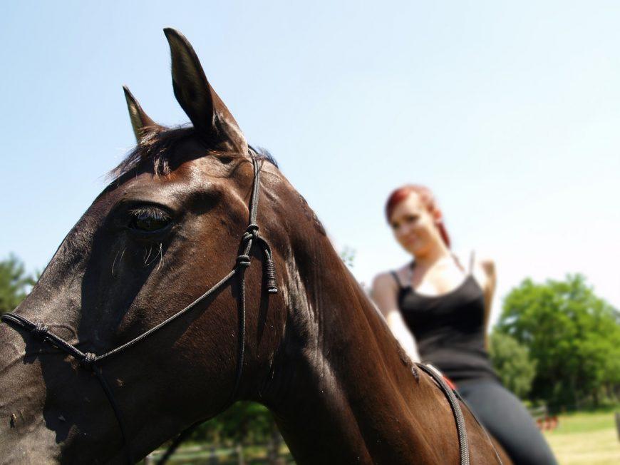 Pferd keilt aus und trifft Reiterin