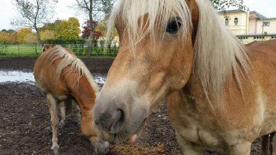 """Lammfrommes Pferd ist """"nachzubessern"""""""
