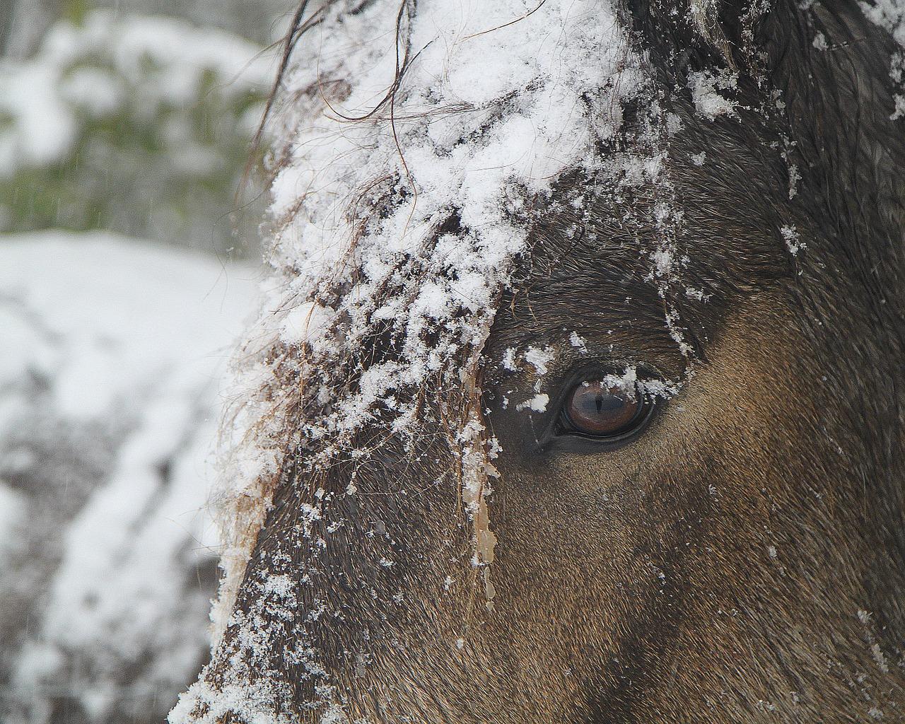 pferd offenstall winter eindecken